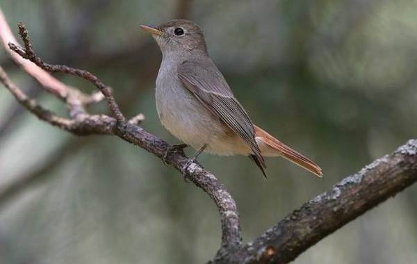 Птицы-Казахстана-Описания-названия-и-особенности-птиц-Казахстана-33