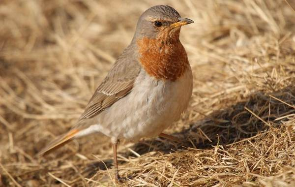 Птицы-Казахстана-Описания-названия-и-особенности-птиц-Казахстана-34