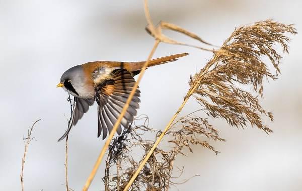 Птицы-Казахстана-Описания-названия-и-особенности-птиц-Казахстана-36