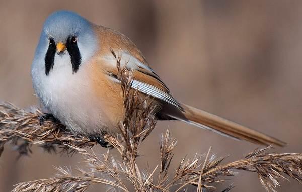 Птицы-Казахстана-Описания-названия-и-особенности-птиц-Казахстана-37