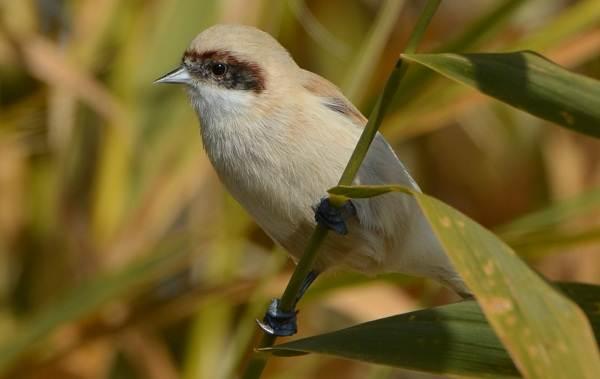 Птицы-Казахстана-Описания-названия-и-особенности-птиц-Казахстана-38