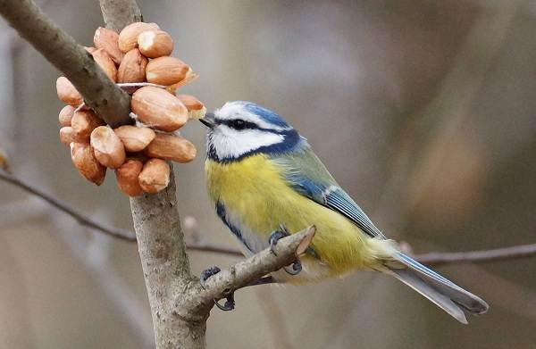 Птицы-Казахстана-Описания-названия-и-особенности-птиц-Казахстана-39
