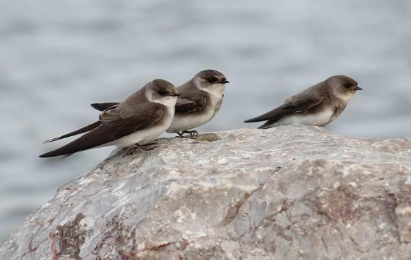 Птицы-Казахстана-Описания-названия-и-особенности-птиц-Казахстана-4
