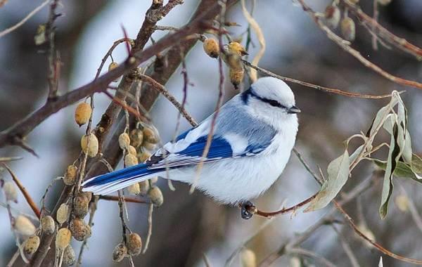 Птицы-Казахстана-Описания-названия-и-особенности-птиц-Казахстана-40