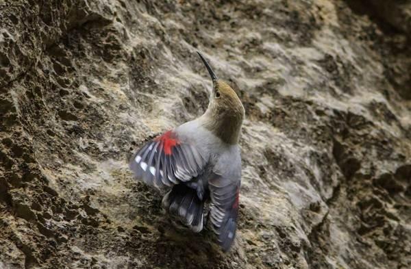 Птицы-Казахстана-Описания-названия-и-особенности-птиц-Казахстана-41