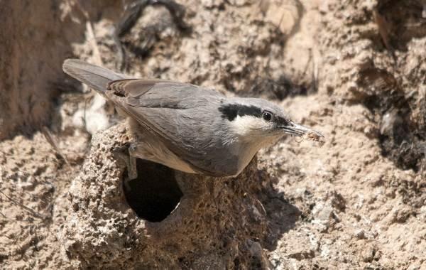 Птицы-Казахстана-Описания-названия-и-особенности-птиц-Казахстана-42