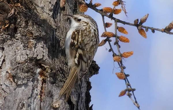 Птицы-Казахстана-Описания-названия-и-особенности-птиц-Казахстана-43