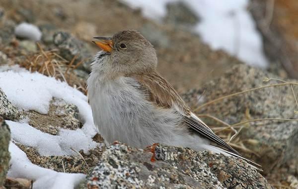 Птицы-Казахстана-Описания-названия-и-особенности-птиц-Казахстана-44