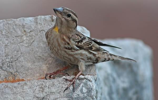 Птицы-Казахстана-Описания-названия-и-особенности-птиц-Казахстана-45
