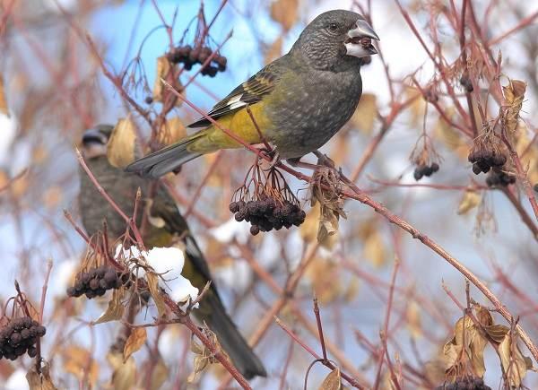 Птицы-Казахстана-Описания-названия-и-особенности-птиц-Казахстана-47