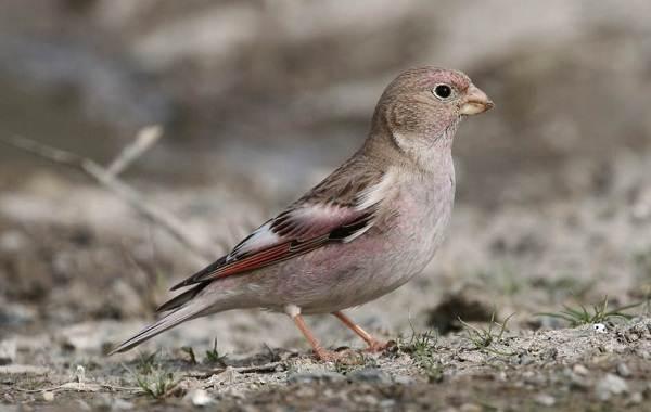 Птицы-Казахстана-Описания-названия-и-особенности-птиц-Казахстана-48