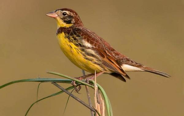Птицы-Казахстана-Описания-названия-и-особенности-птиц-Казахстана-49