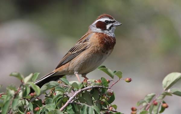 Птицы-Казахстана-Описания-названия-и-особенности-птиц-Казахстана-50