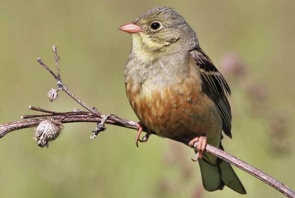 Птицы-Казахстана-Описания-названия-и-особенности-птиц-Казахстана-51