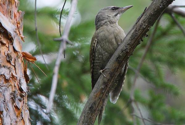 Птицы-Казахстана-Описания-названия-и-особенности-птиц-Казахстана-52
