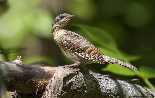 Птицы-Казахстана-Описания-названия-и-особенности-птиц-Казахстана-54
