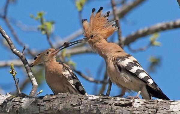 Птицы-Казахстана-Описания-названия-и-особенности-птиц-Казахстана-56