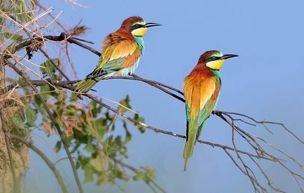 Птицы-Казахстана-Описания-названия-и-особенности-птиц-Казахстана-57