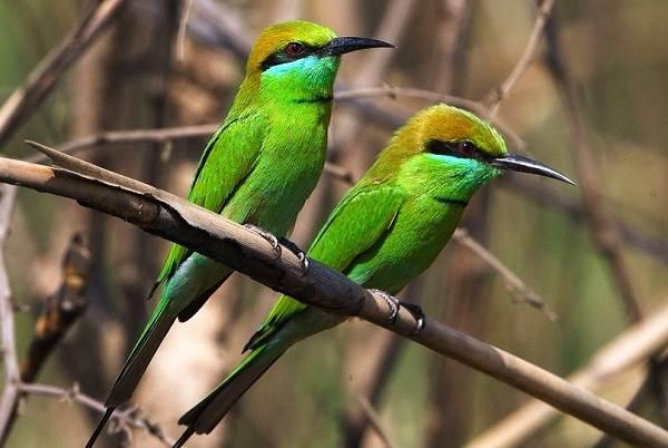 Птицы-Казахстана-Описания-названия-и-особенности-птиц-Казахстана-58