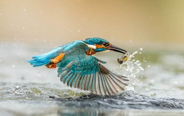 Птицы-Казахстана-Описания-названия-и-особенности-птиц-Казахстана-59