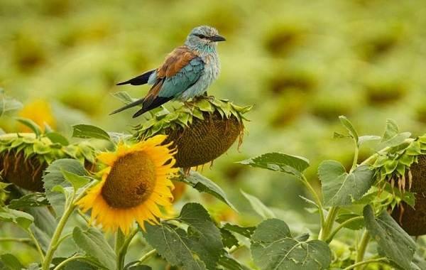 Птицы-Казахстана-Описания-названия-и-особенности-птиц-Казахстана-63