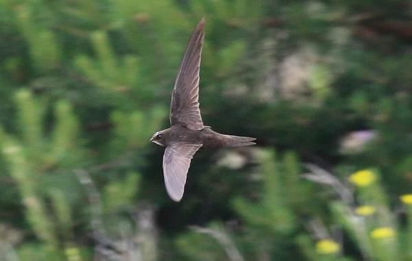 Птицы-Казахстана-Описания-названия-и-особенности-птиц-Казахстана-64
