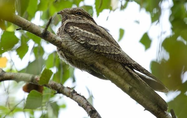 Птицы-Казахстана-Описания-названия-и-особенности-птиц-Казахстана-66