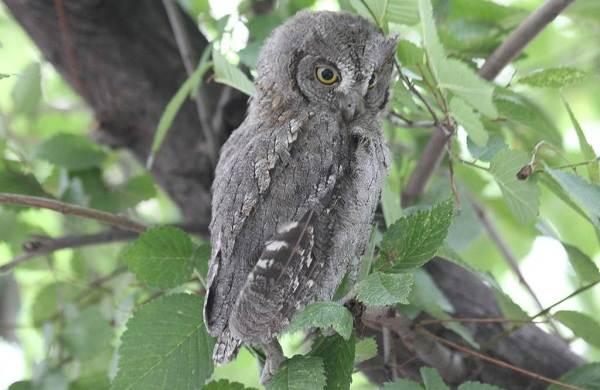 Птицы-Казахстана-Описания-названия-и-особенности-птиц-Казахстана-67