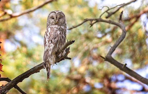 Птицы-Казахстана-Описания-названия-и-особенности-птиц-Казахстана-68