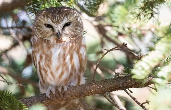 Птицы-Казахстана-Описания-названия-и-особенности-птиц-Казахстана-69