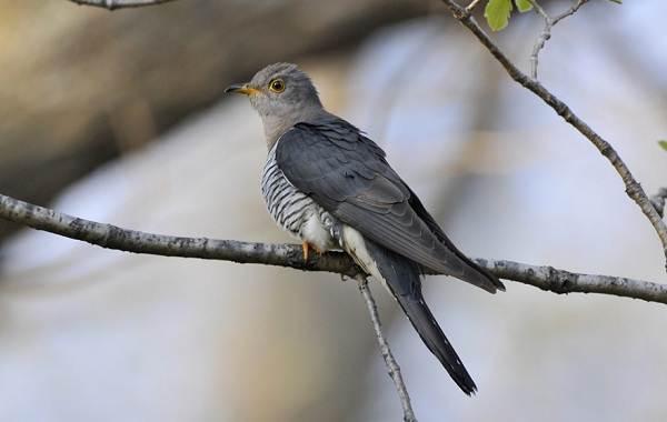 Птицы-Казахстана-Описания-названия-и-особенности-птиц-Казахстана-71