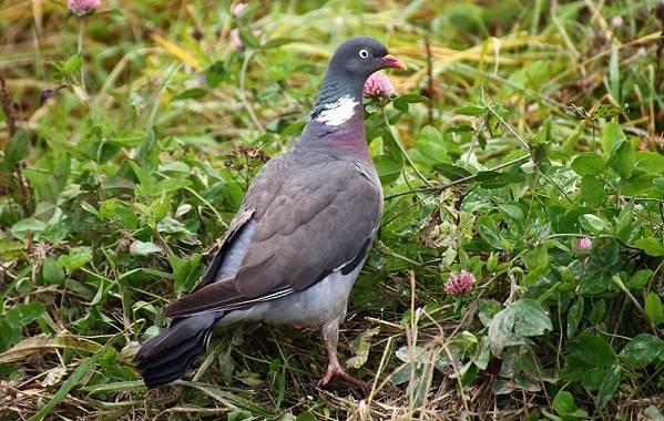 Птицы-Казахстана-Описания-названия-и-особенности-птиц-Казахстана-72