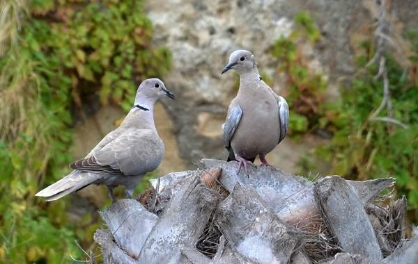 Птицы-Казахстана-Описания-названия-и-особенности-птиц-Казахстана-73