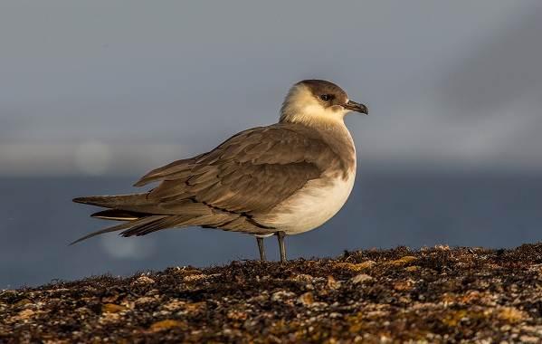 Птицы-Казахстана-Описания-названия-и-особенности-птиц-Казахстана-78