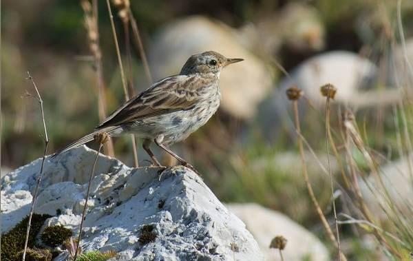 Птицы-Казахстана-Описания-названия-и-особенности-птиц-Казахстана-8
