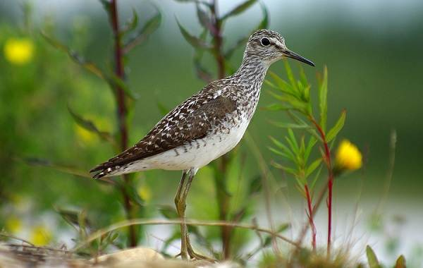 Птицы-Казахстана-Описания-названия-и-особенности-птиц-Казахстана-80