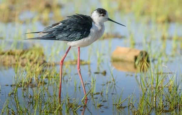 Птицы-Казахстана-Описания-названия-и-особенности-птиц-Казахстана-83