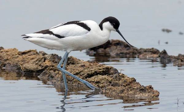 Птицы-Казахстана-Описания-названия-и-особенности-птиц-Казахстана-84