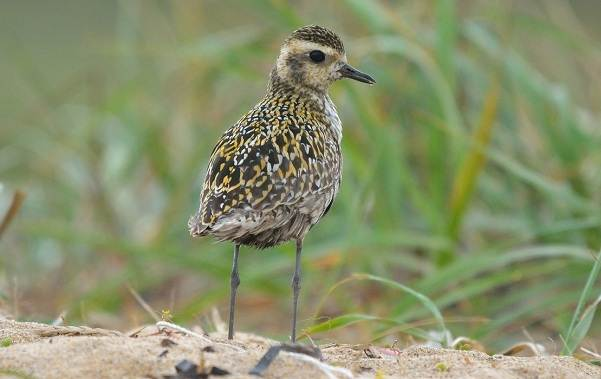 Птицы-Казахстана-Описания-названия-и-особенности-птиц-Казахстана-86