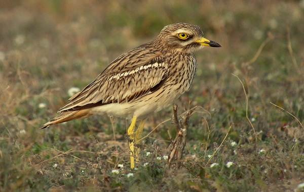Птицы-Казахстана-Описания-названия-и-особенности-птиц-Казахстана-88