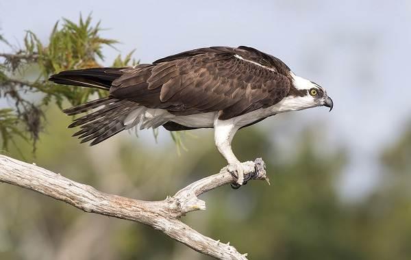 Птицы-Казахстана-Описания-названия-и-особенности-птиц-Казахстана-89