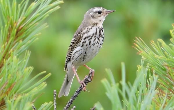 Птицы-Казахстана-Описания-названия-и-особенности-птиц-Казахстана-9