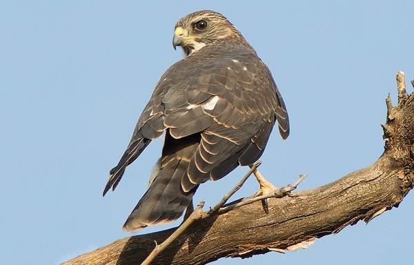 Птицы-Казахстана-Описания-названия-и-особенности-птиц-Казахстана-90