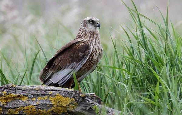 Птицы-Казахстана-Описания-названия-и-особенности-птиц-Казахстана-91