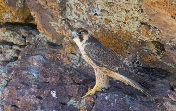 Птицы-Казахстана-Описания-названия-и-особенности-птиц-Казахстана-92