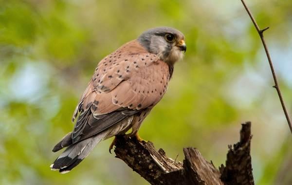 Птицы-Казахстана-Описания-названия-и-особенности-птиц-Казахстана-94