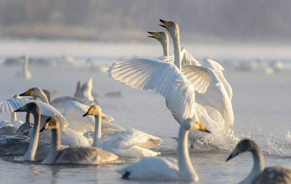 Птицы-Казахстана-Описания-названия-и-особенности-птиц-Казахстана-95