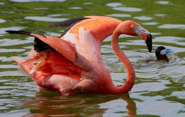 Птицы-Казахстана-Описания-названия-и-особенности-птиц-Казахстана-96