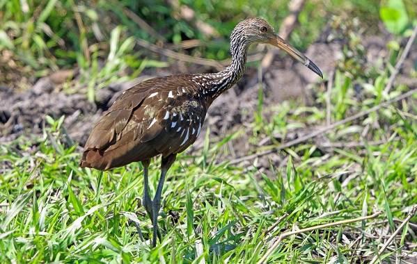 Птицы-Казахстана-Описания-названия-и-особенности-птиц-Казахстана-98