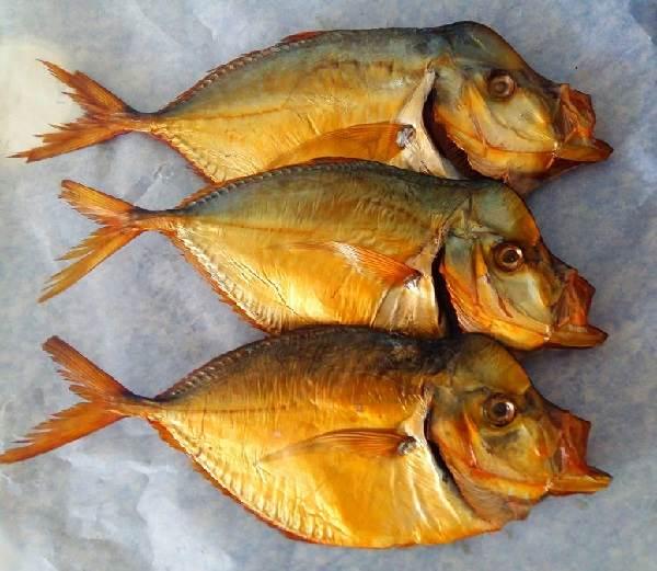 Вомер-рыба-Описание-особенности-виды-и-среда-обитания-вомера-5